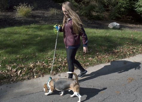 Student begins independent pet-sitting business