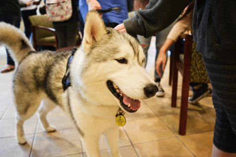Students take a paws from stress with Campus Canines