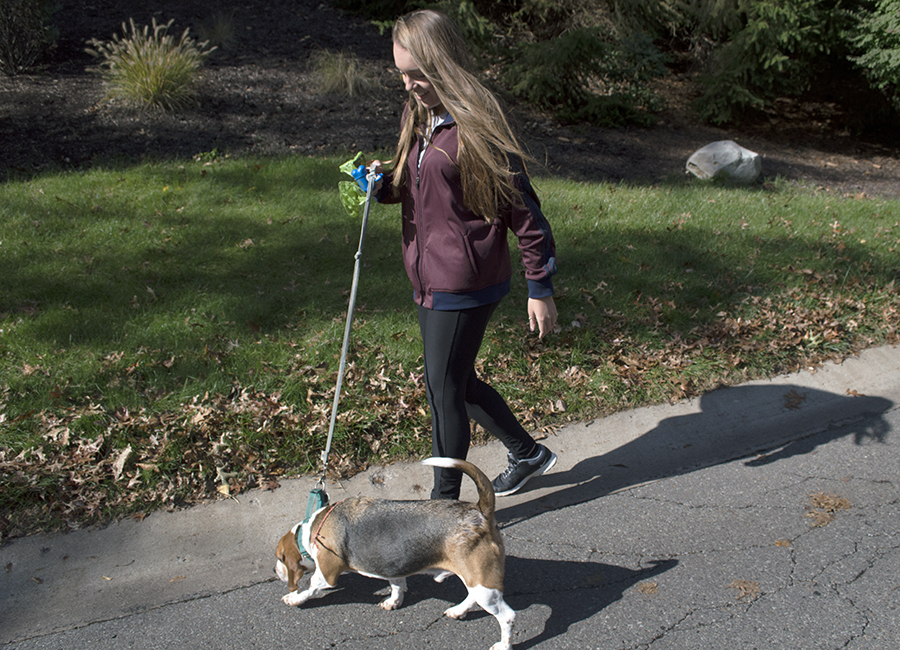 Alex Trybus, owner of Auntie Alex's Pet Sitting, takes Lincoln, a beagle mix, out for a walk in Mount Lebanon on Oct. 25.