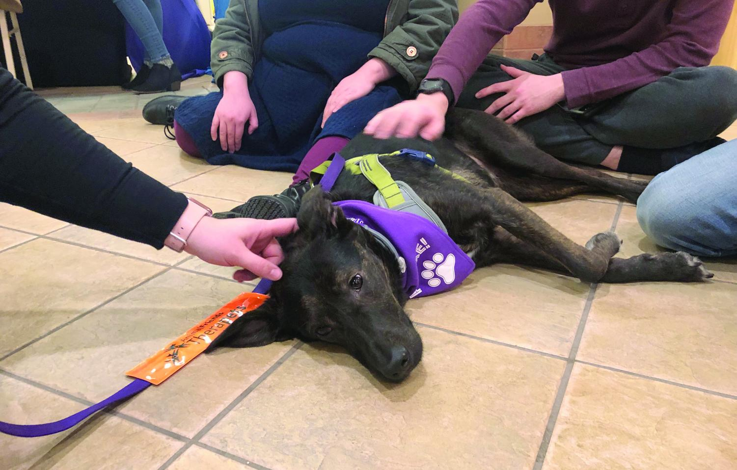 Arya, a 3-year-old therapy dog from Therapets, came to visit students during the CAB sponsered Hound Hangout on Tuesday, Feb. 19. Therapets is a program through Humane Animal Rescue where dogs and their handlers learn how to bring a relaxing environment as a form of therapy for others.
