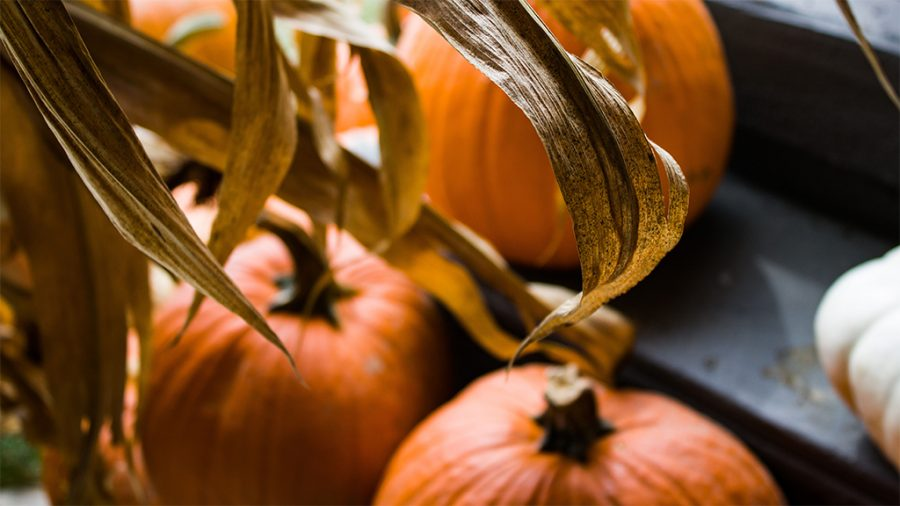 Fall into autumn with 8 activities for non-scary Halloween lovers